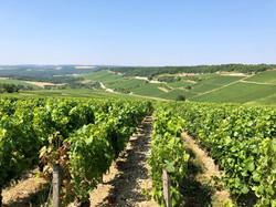 Vignes - crédit photo - CDT Aube (4)