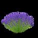 lavenderbush.png