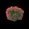 AM154-042-Nerium_Oleander.I14.2k.png