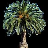 20-Free-Tree-PNG-Images-phoenixcanariens