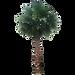 20-Free-Tree-PNG-Images-washingtoniafil_