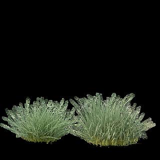 purplemoorgrass.png