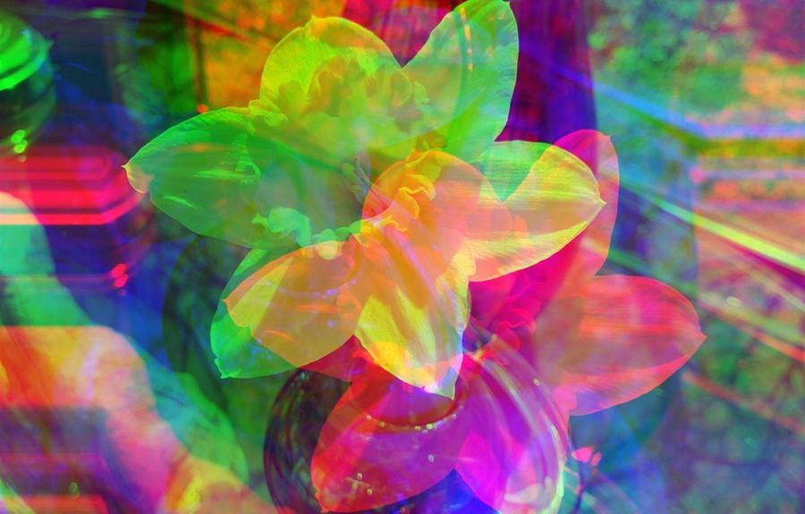 My Shattered Daffodil by Harvey John Beth