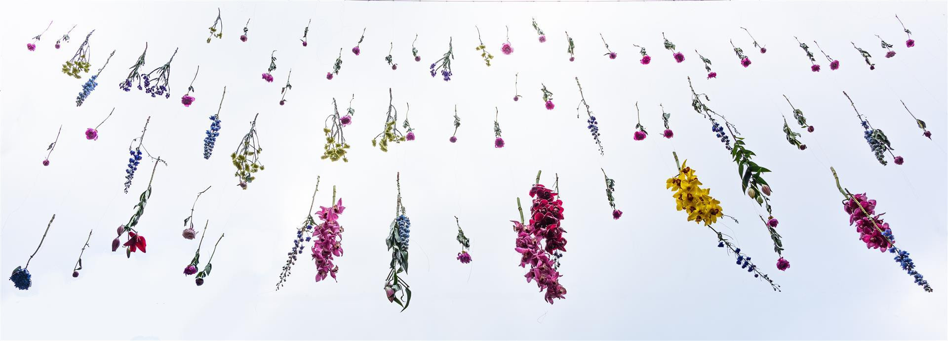 Its Raining Flowers by Steve Morrison.jp