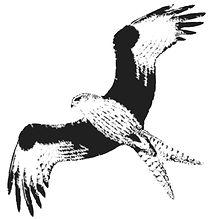 FOGL kite_20-11-19.jpg