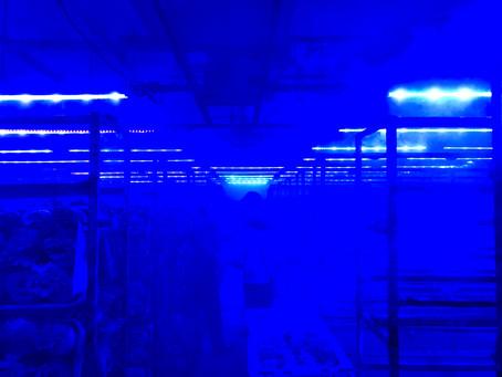 青い光の中で