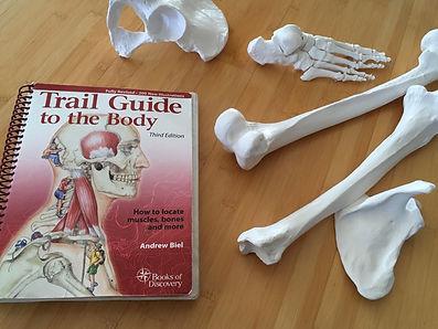 Trail Guide Bones.jpeg