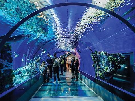 aquarium_img.jpg