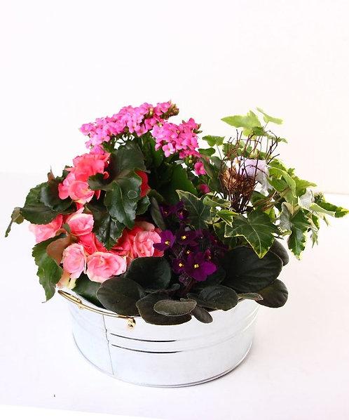 Blooming Plant Arrangement with Birds Nest
