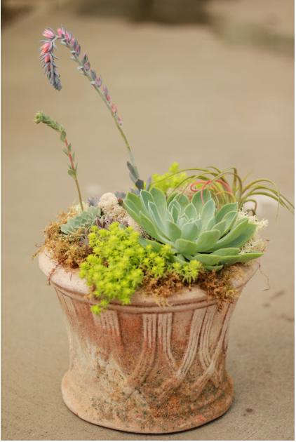 Succulent Garden Clay Pot