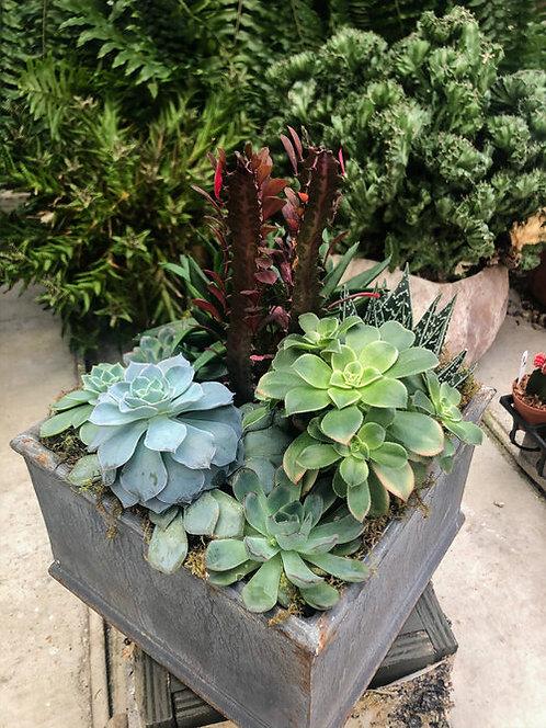 """7.5"""" Square Succulent Planter"""