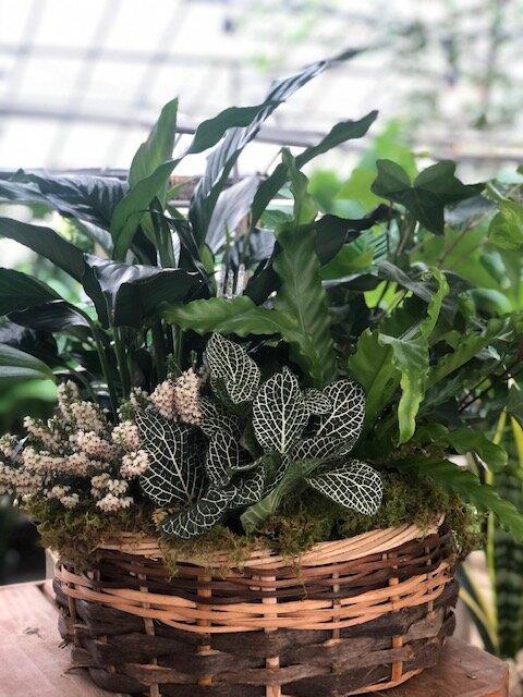 Simplistic Dish Garden
