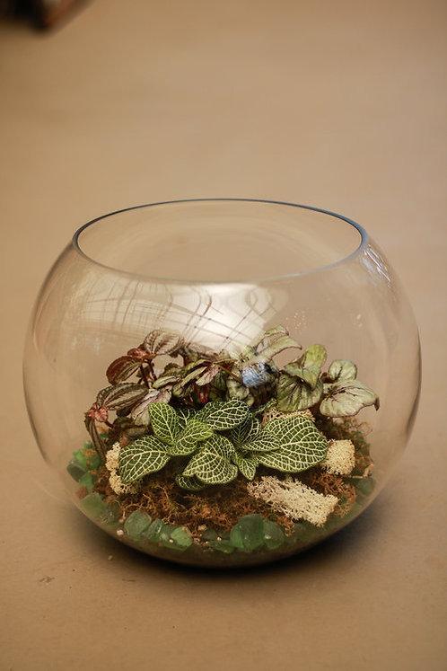 Large Bubble Bowl Terrarium