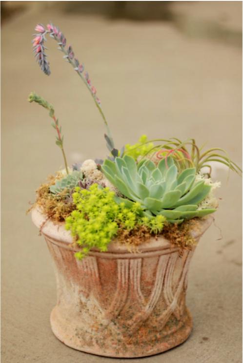 Clay Succulent Pot