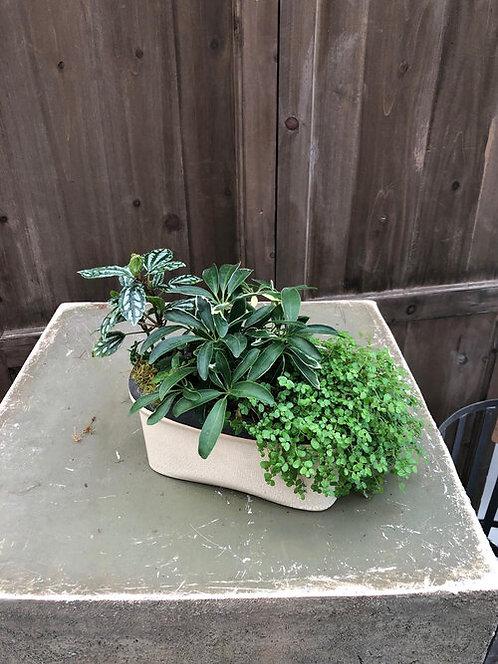 Sleek Dish Garden