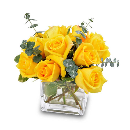 Yellow Rose Bravo