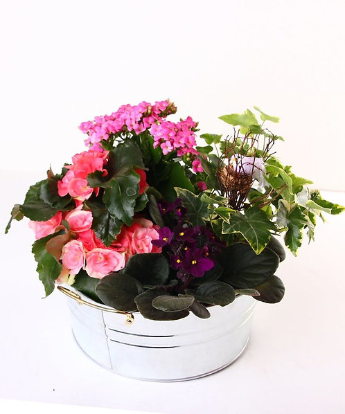 Blooming Plants with Birds Nest