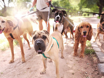 Why Daily Walks Are Good For You And Your Dogs