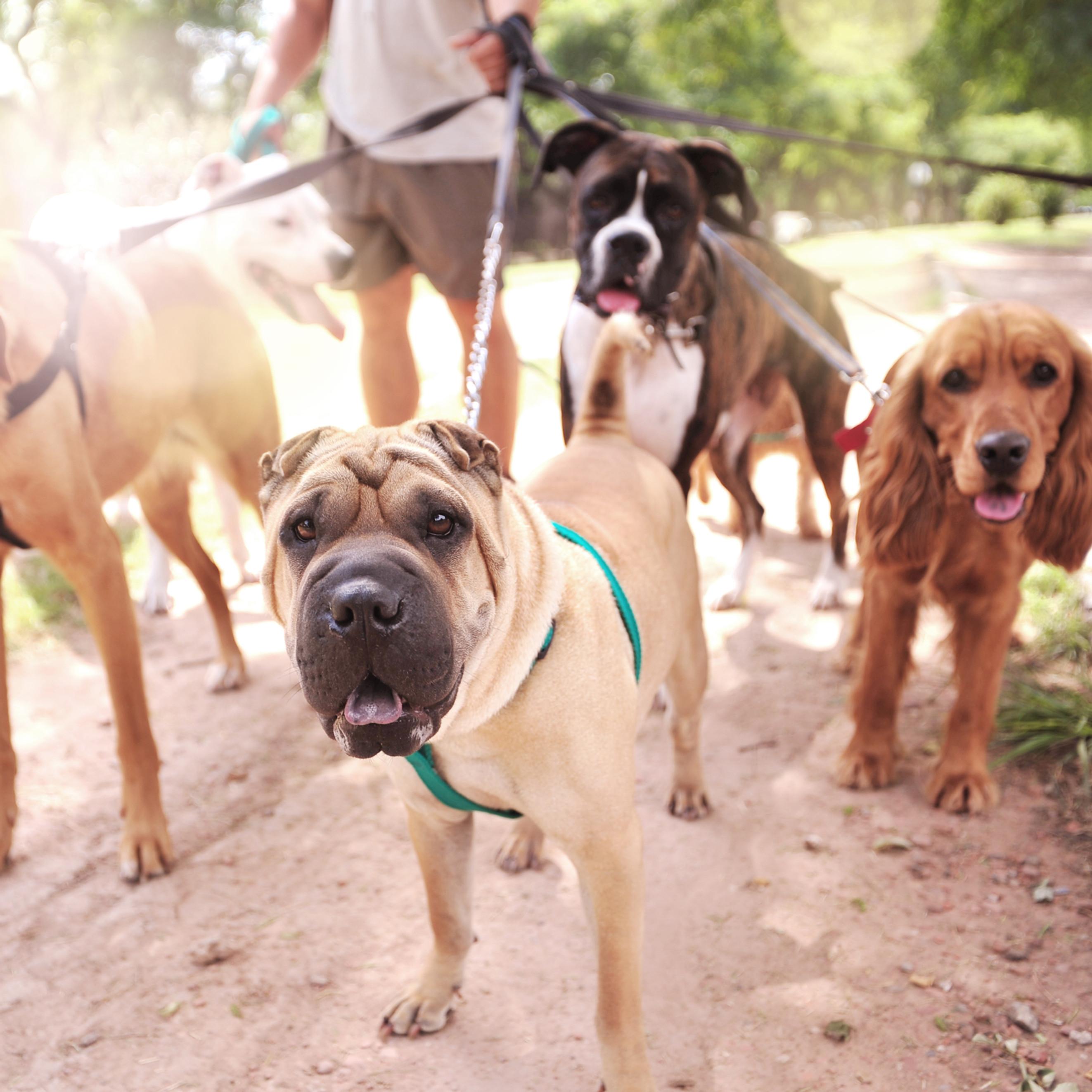 Group Walks