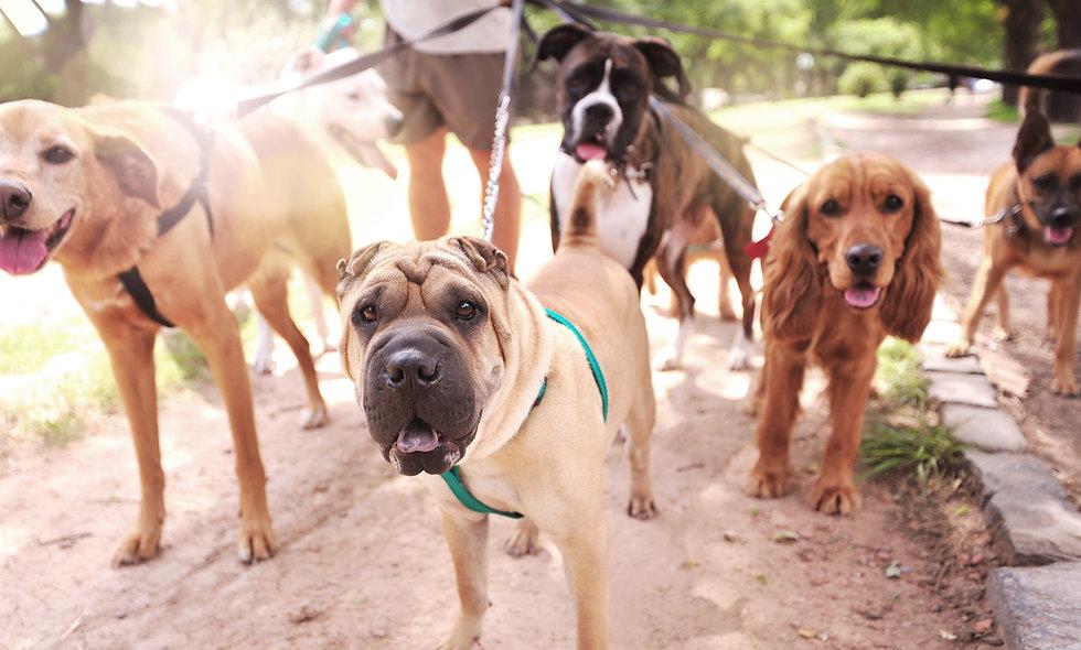 Hunde-Ernährungslehre