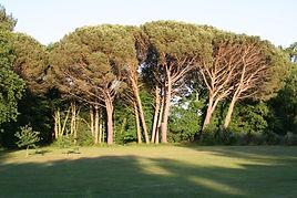 Bois de Gascogne livre votre bois de chauffage dans les Landes