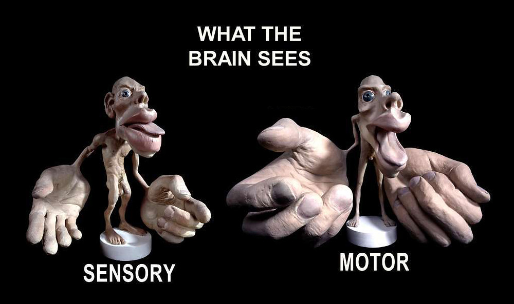 What the Brain Sees, Osteopath Anthony Dileo