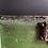 Thumbnail: Gorgeous Chippy Paint Trunk