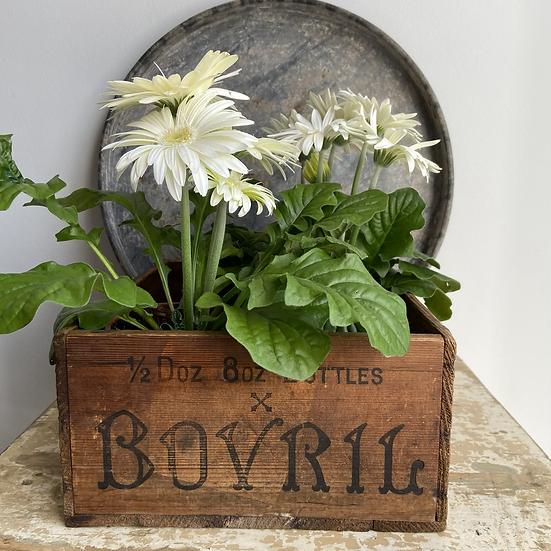 Vintage Bovril Crate