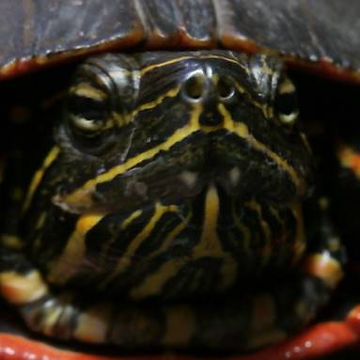 Picture1 turtle.jpg