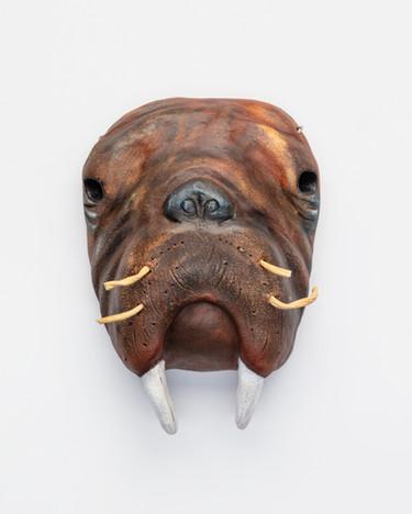 Walrus Steady
