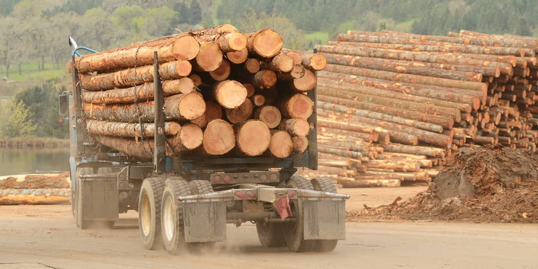 We bring the logs straight from the forest, to our yard, for your products.