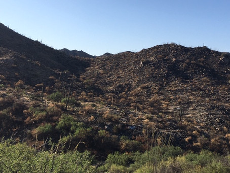 Dove Fire Aftermath
