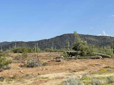 Saguaro Destruction