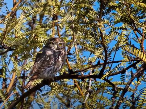 TA Tidbits #18-Owl-Water-Fire-Grass & Trash