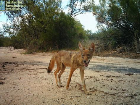 Living With Arizona Wildlife Event Summary Report