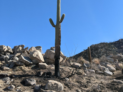 Tortolita Mountain Fires-Aftermath