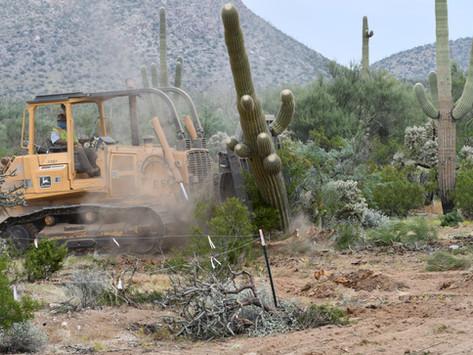 Saguaro Destruction-Part 2