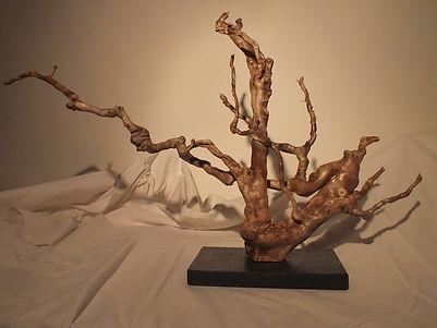 Baum k.JPG