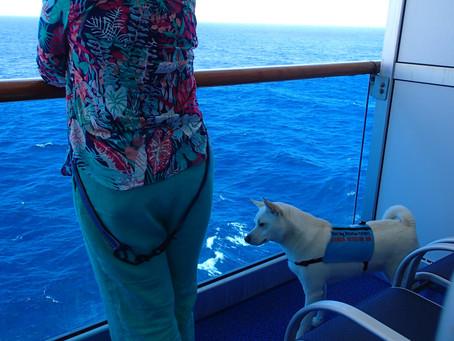 Flight & Cruise to Mexico (Delta/Princess) with a Service Dog