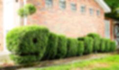 topiary_caterpillar.jpg
