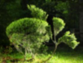 topiary_shrub2.jpg