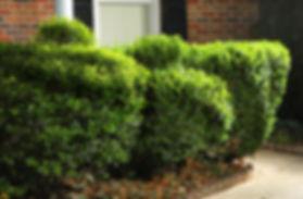 topiary_shrubs.jpg