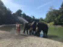 Elephant washing in Tangkahan, North Sumatra