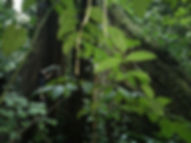 Discover the rainforest in Tangkahan, North Sumatra