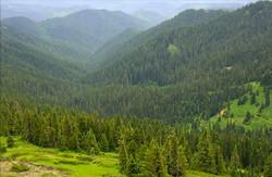 Calapooya_Mountains,_Umpqua_National_Forest,_Oregon