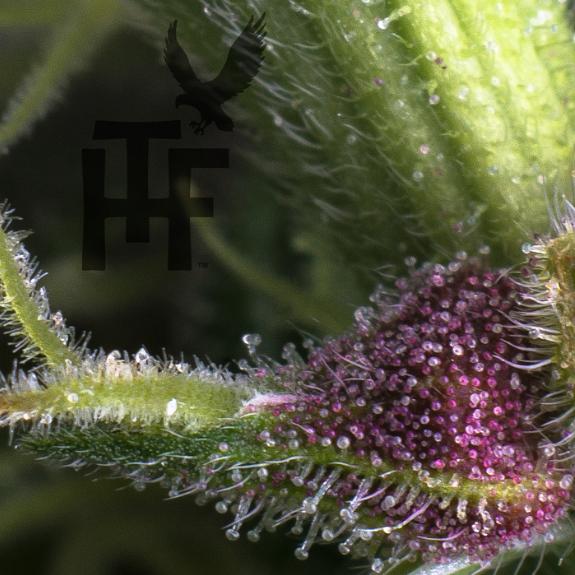 Treehawk-Farms-Flower-2020-Solutions