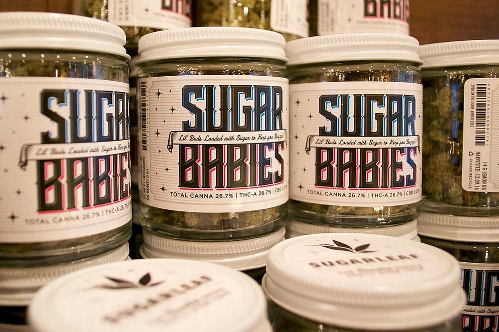 2020-Solutions-Sugarleaf-Sugar-Babies
