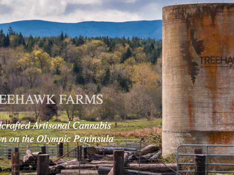 Grower Profile: Treehawk Farms