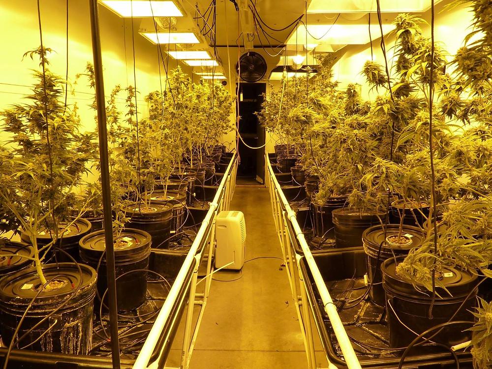 2020-ephrata-view-askew-farms-grow-room