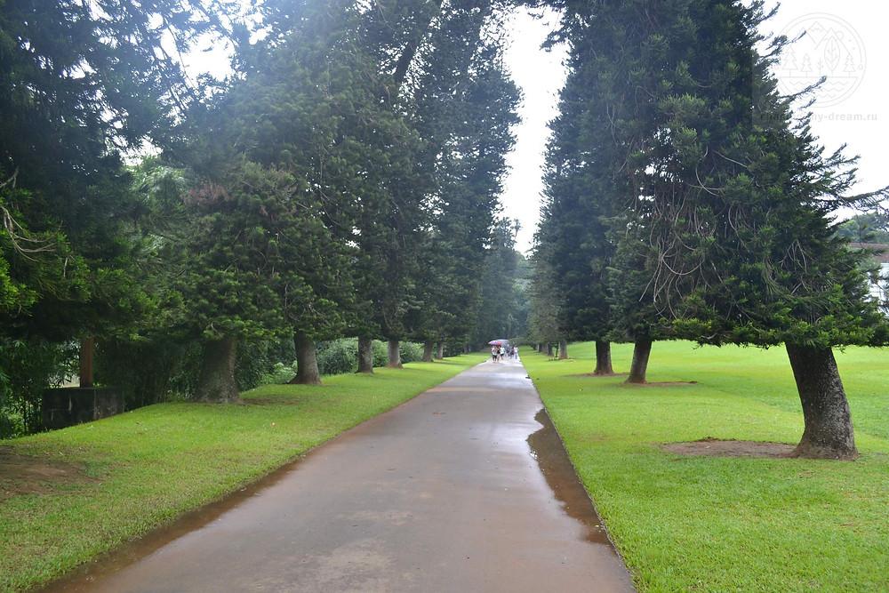 парк Flower Garden, Перадения, самобытно по миру на Цейлон